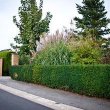 Laurent Lacroix, Parcs & Jardins - Crisnée - Entretien de jardins