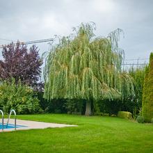 Laurent Lacroix, Parcs & Jardins - Crisnée - Entretien de jardins  de jardins ardinage - Entretien de jardins
